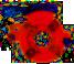 Cabeza rosacadora 882044300